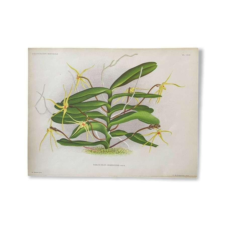1889 L'Illustration Horticole botanical lithograph Orchid