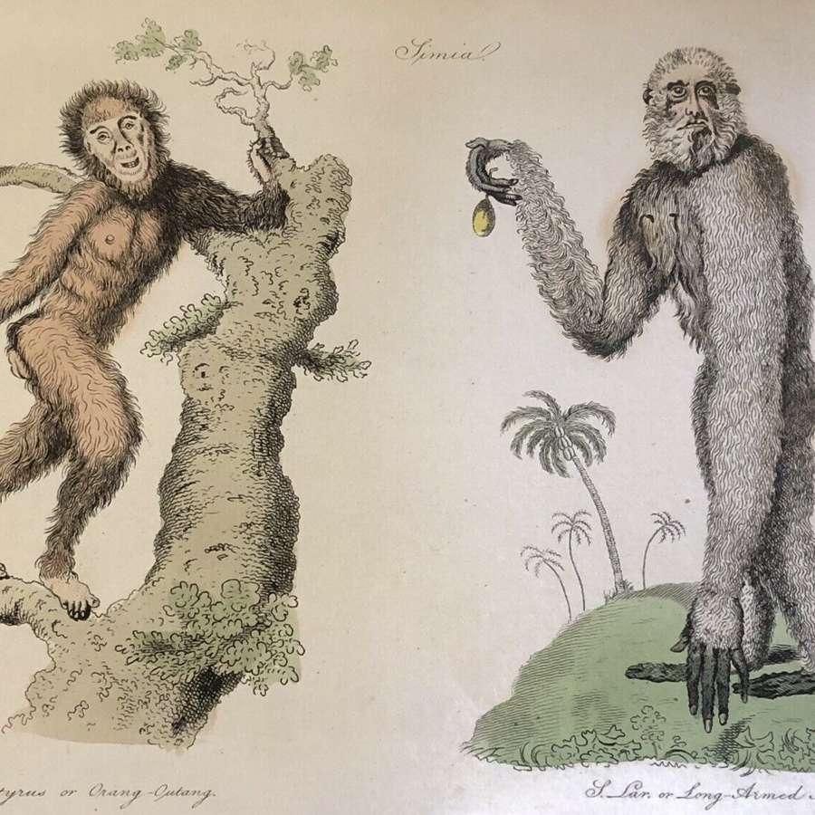 Natural History lithograph