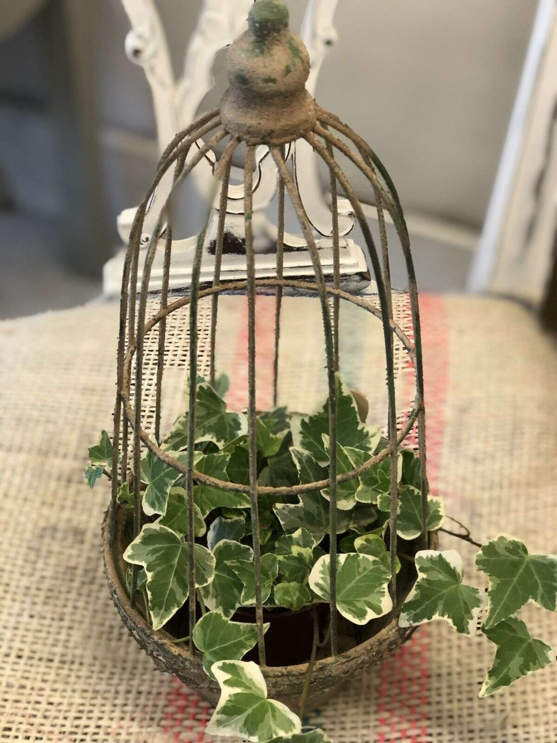 Vintage style caged planter