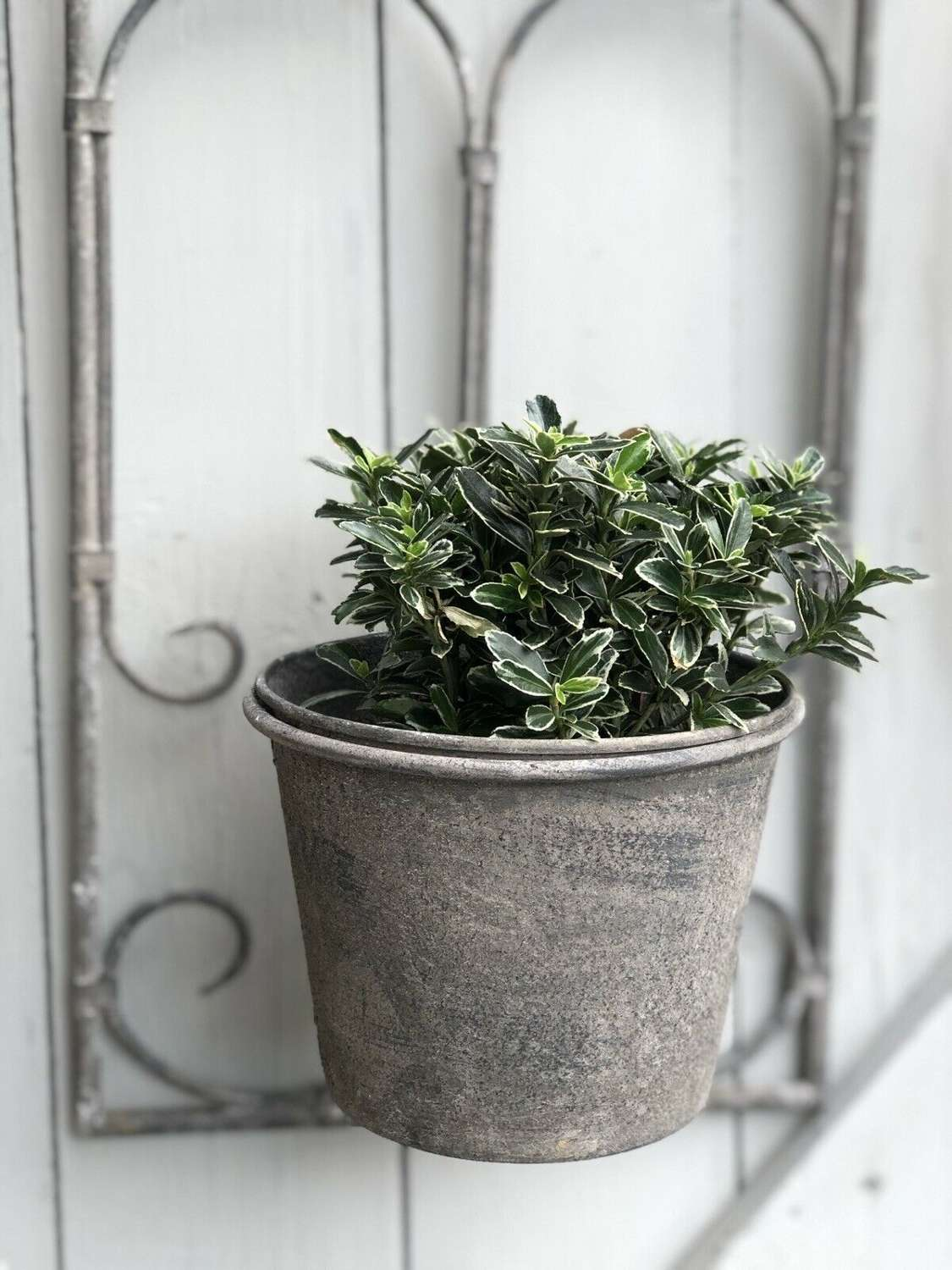 Vintage Style Wall Planter