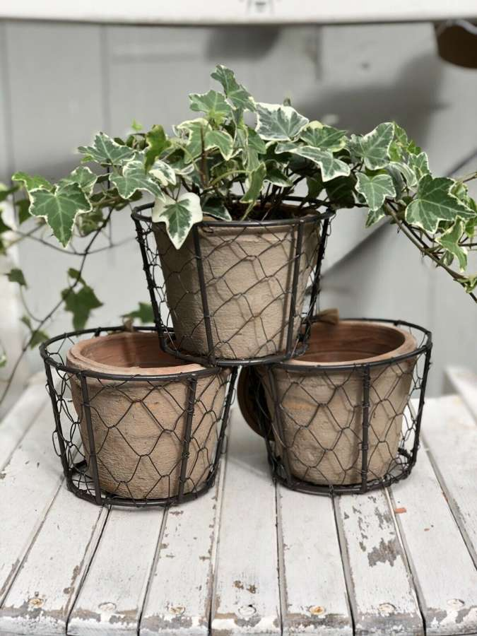 Three herb plant pots