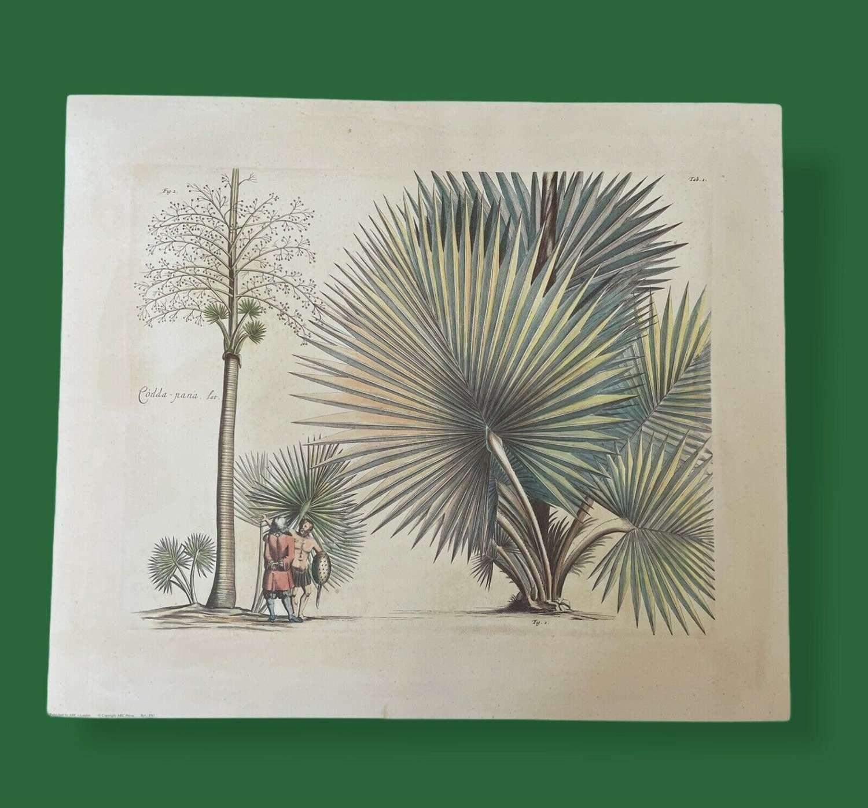 Tropical Botanical print