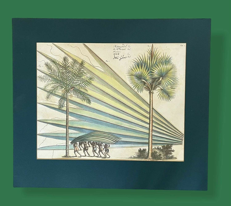 Palm tree botanical print