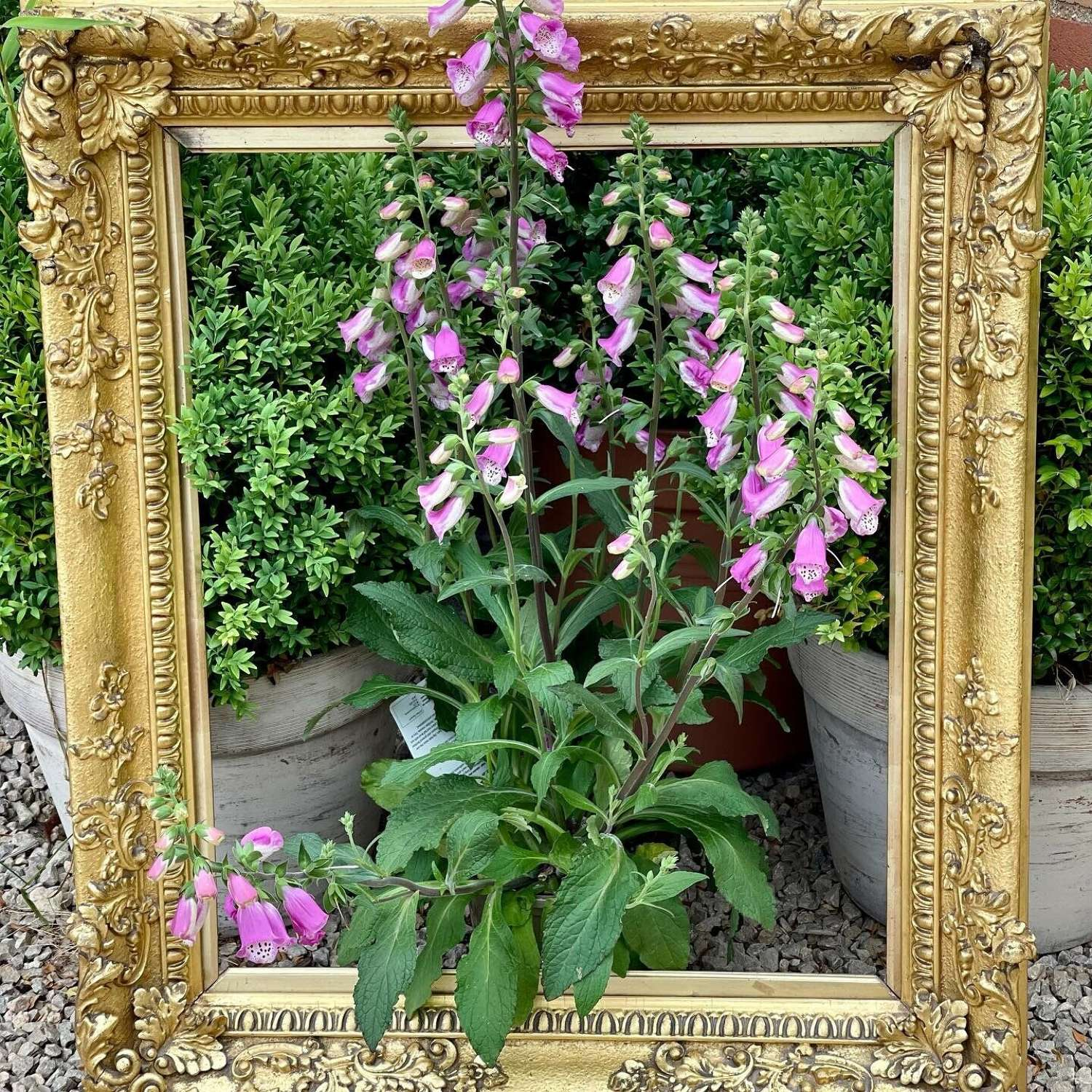 19th Century gilt picture frame