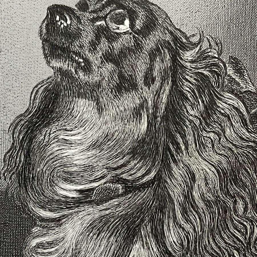 Sir Edwin Landseer steel engraving of a Spaniel