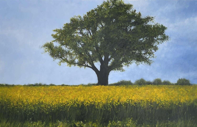 "David Brammeld Oil On Canvas "" Yellow Summer"""